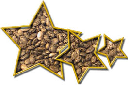Chia Seed Star Graphic